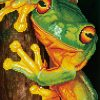 DD7.031—Green-Tree-Frog